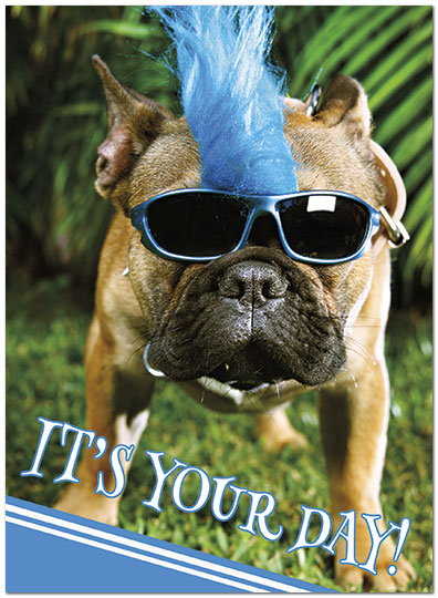 Rad Dog Birthday Card D8023U-Y