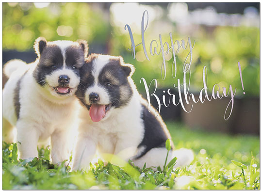 Puppy Love Birthday Card A9015U-X