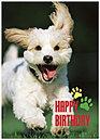 Smiling Puppy Birthday Card 932D-Y