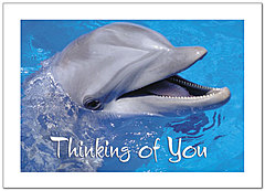 Thinking of You Dolphin Greeting Card 958D-Y