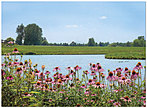 Scenic Pond Note Card X61U-Y