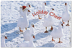 Holiday Cheer Postcard X587P-B