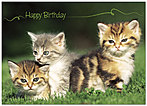 Kitties Birthday Card 146D-Y
