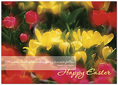 Easter Tulips Greeting Card 168D-Y