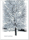 Winter Frost Holiday Card H1298U-AA