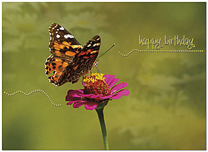 Monarch Dance Birthday Card A2015U-X