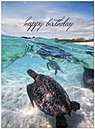 Sea Turtle Birthday Card A2027U-Y