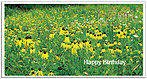 Brown-Eyed Susans Birthday Card A2030T-Z