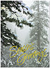 Frosted Evergreens Holiday Card H2177G-AAA