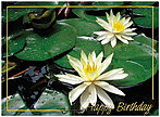 Lily Pad Birthday Card A3007G-W