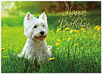 Puppy Dog Birthday Card A3040D-Y