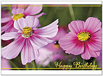 Spring Birthday Card A4017U-X