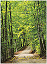 Forest Road Birthday Card A4032U-X