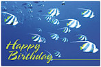 Tropical Waters Postcard A4054P-ZZ