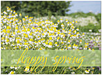 Floral Meadows Spring Card D4068U-Y