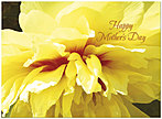 Bright Floral Mother's Day Card D4085U-Y