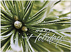 Sparkling Pine Holiday Card H4202S-AAA