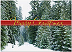 Pine Tree Path Christmas Card H4213U-AA