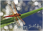 Dragonfly Birthday Card A5012U-X
