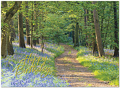 Sunlit Path Birthday Card A5014U-X