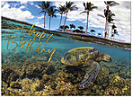 Sea Life Birthday Card A5015U-X