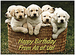 Puppies Birthday Card A5017U-X