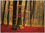 Walk in the Woods Thanksgiving Card H5104G-AAA