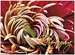 Fall Floral Thanksgiving Card H5122U-AA