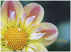 Dahlia Birthday Card A6016U-X