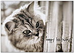 Cute Kitty Birthday Card A6026D-Y