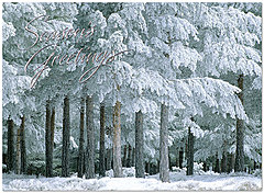 Frosted Greens Holiday Card H6126S-AAA