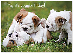 Birthday Bulldogs A7027D-Y