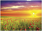 Sunset Field Notecard D7057U-Y