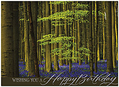 Bluebell Forest Birthday Card A8009U-X