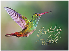 Hummingbird Birthday Card A8011U-X
