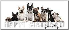Bulldog Birthday Card A8037L-Y