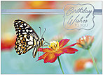Butterfly Birthday Card A9006S-W