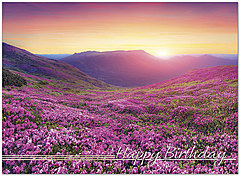 Lavender Fields Birthday Card A9012U-X