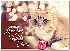 Purrfect Season Holiday Card D9196U-A