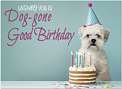 Dog-gone Birthday Card D1463U-Y