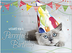 Purrfect Birthday Card D1464U-Y