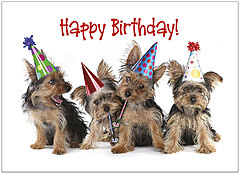 Party Dogs Birthday Card D1466D-X